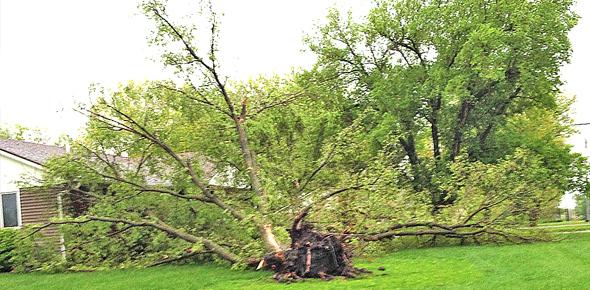 Combes Tree
